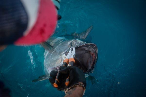 redfish-le-providence-2492