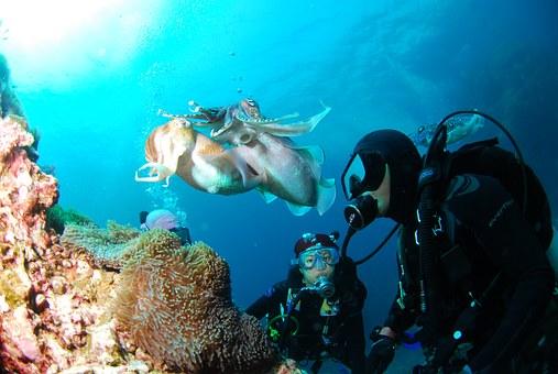 Plus d'infos - Poseidon Plongée - Port Camargue